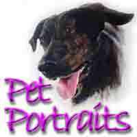 pet portraits thumbnail