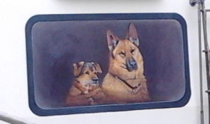 herston dogs cropped
