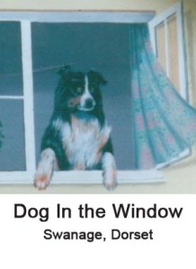 dog in the window thumbnail