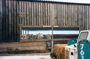 knitson cows5
