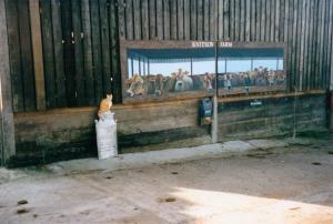 knitson cows8